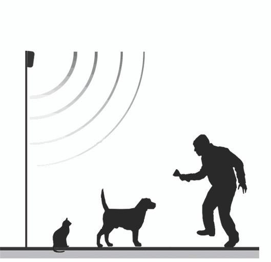 dog-sensors.jpg